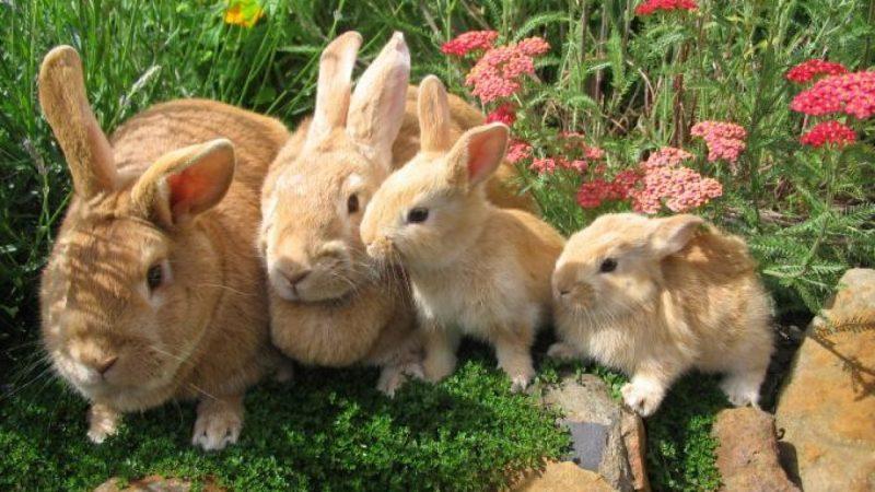 Mộng thấy thỏ đánh đề con gì?
