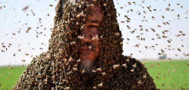 Nằm mơ thấy ong đốt đánh con gì? Ong đốt là số mấy?
