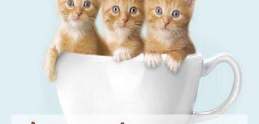 Nằm mơ thấy 3 con mèo đánh số gì? Giải mã giấc mơ 3 con mèo