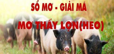 Nằm mơ thấy lợn đánh lô đề con gì? Lợn là số mấy?