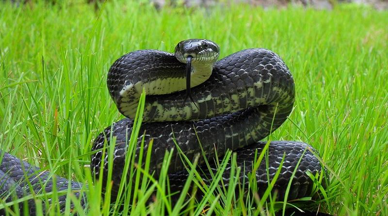 Nằm mơ thấy rắn đuổi đánh lô đề con gì? Rắn đuổi là số mấy?